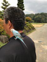 作業報告 (幸せの青い鳥)